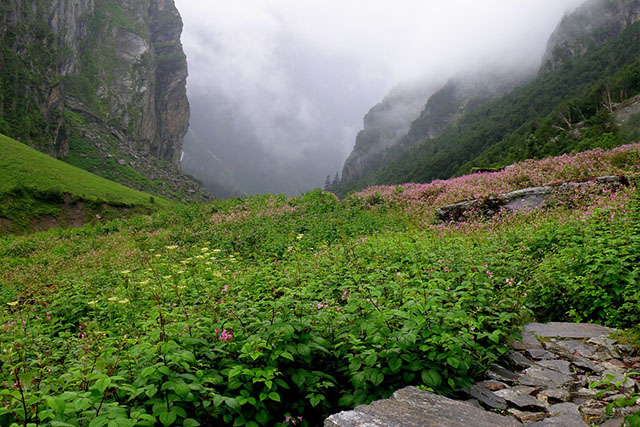 valley of flowers from delhi
