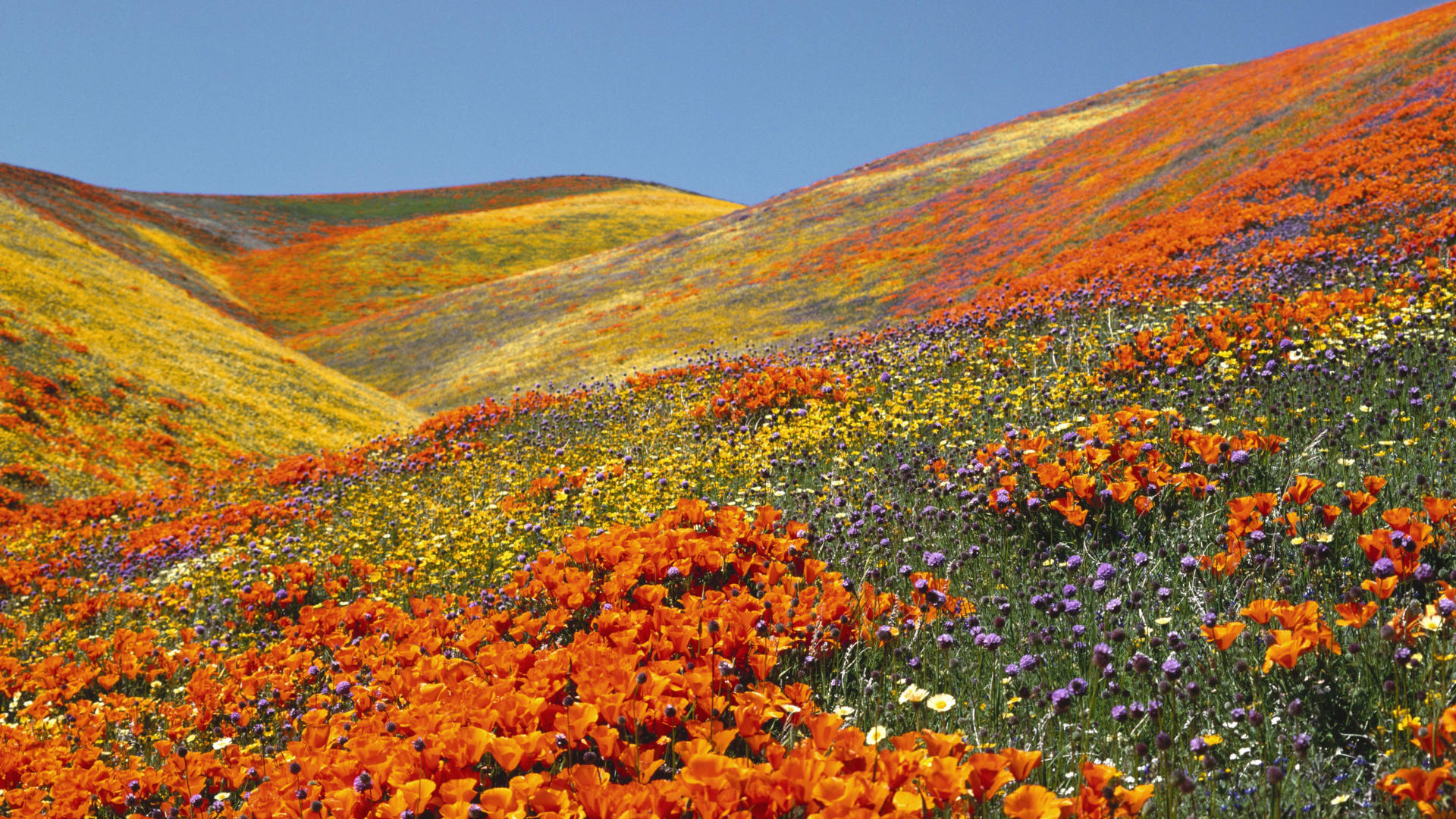 Valley of Flowers Best Time to Visit