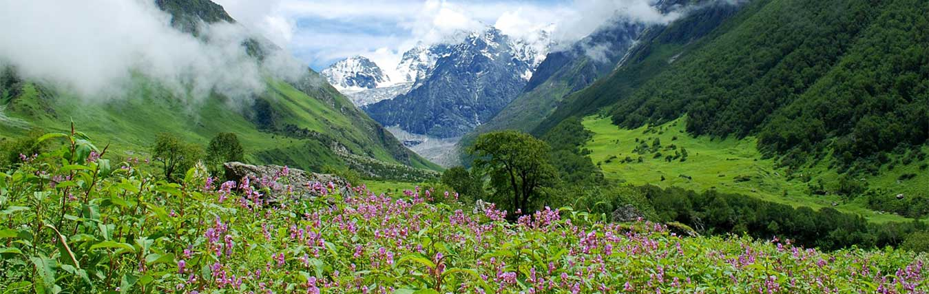 The Valley of Flowers Banner