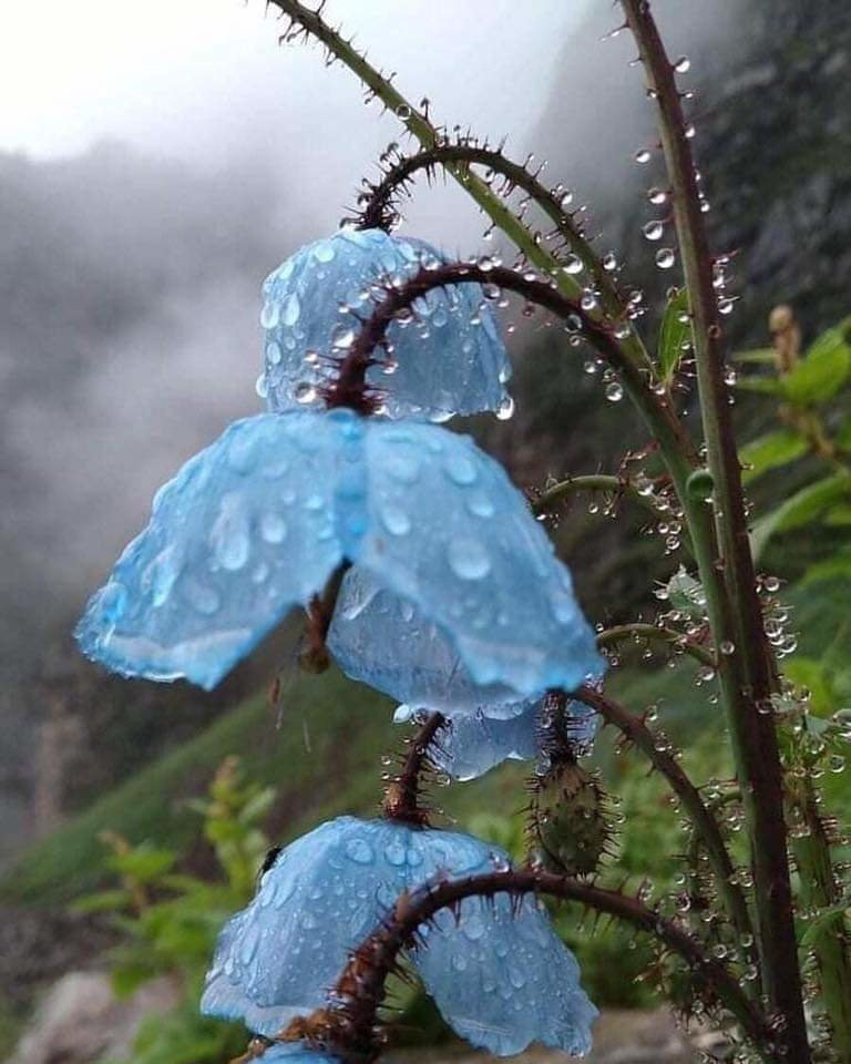 Valley Of Flowers-1