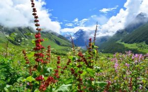 best time to visit the valley of flowers