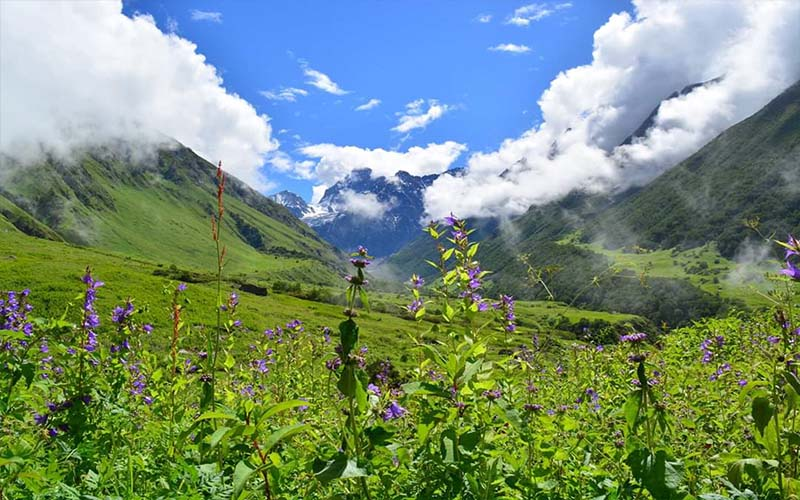 Valley of Flowers From Haridwar