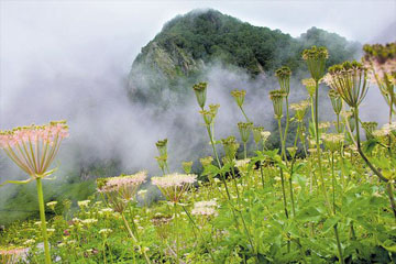 Valley of Flowers With Hemkund Sahib