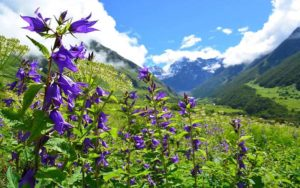 Days Required to Trek to Valley of Flowers