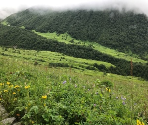 Trekking To Valley Of Flowers