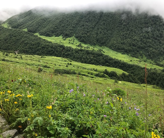 Trekking To Valley Of Flowers