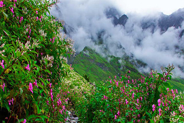 Valley of Flowers By Helicopter
