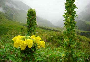 Ghangaria to The Valley of Flowers