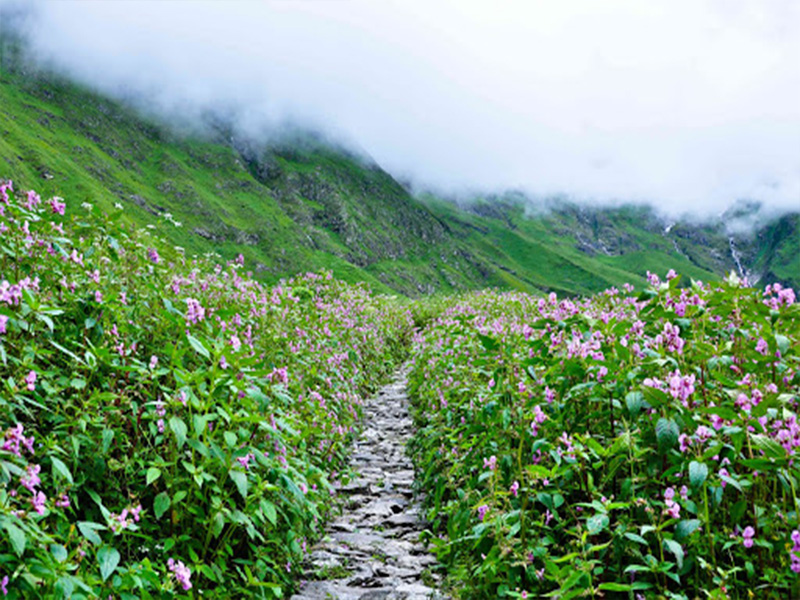 Valley Of Flowers Near Badrinath
