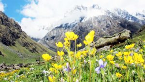 Enjoy your vacations in Valley of Flowers Park